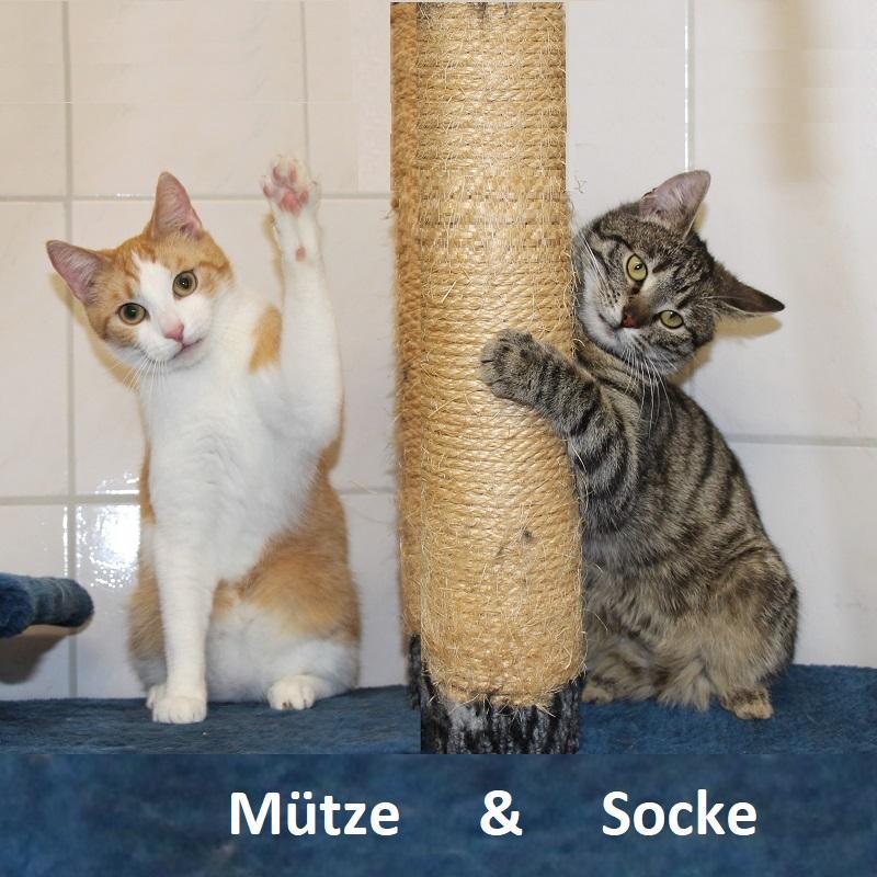 Mütze & Socke