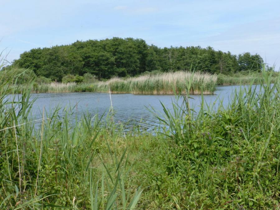 Torfloch am Kummerower See