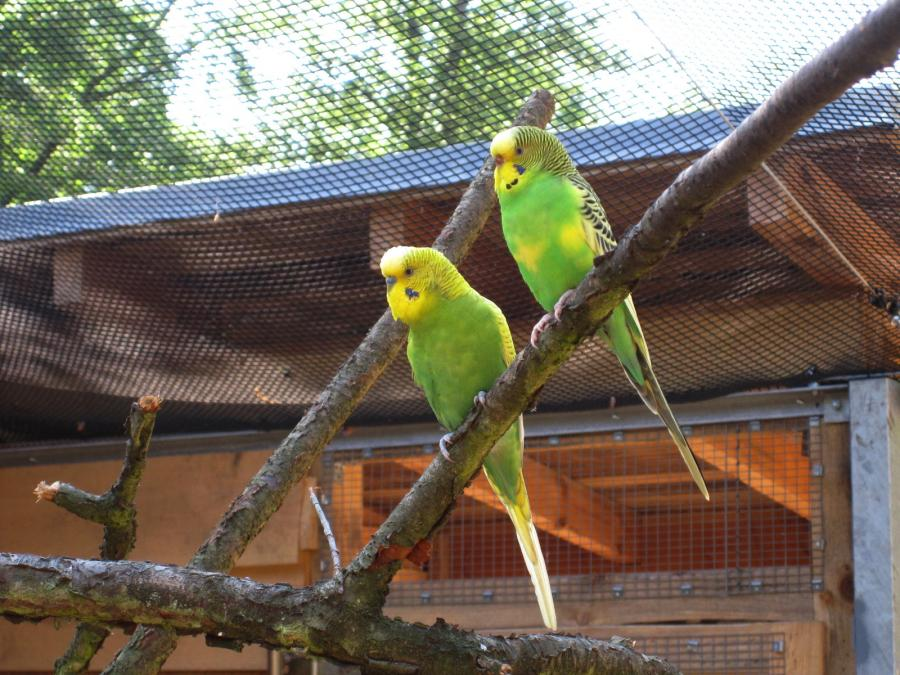 Vogelvoliere 10