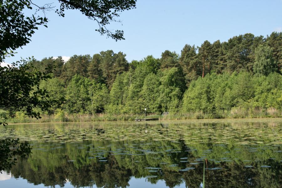 Natur_See_Wald_Foto: Galler