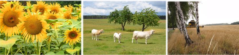 Landwirtschaft in OSL - Bilder: Schöne