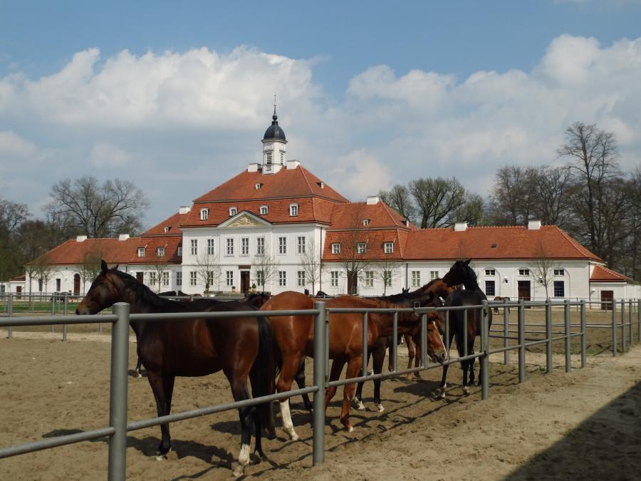 Hauptgestüt, Neustadt (Dosse)