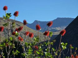 Nördliche Drakensberge