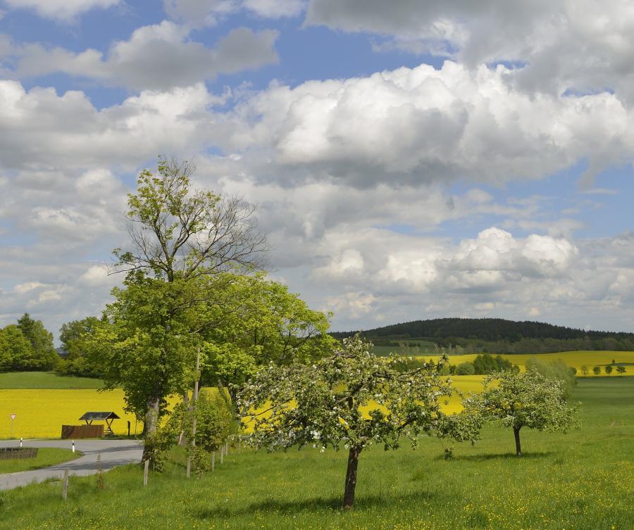 Oberdorf Sohland