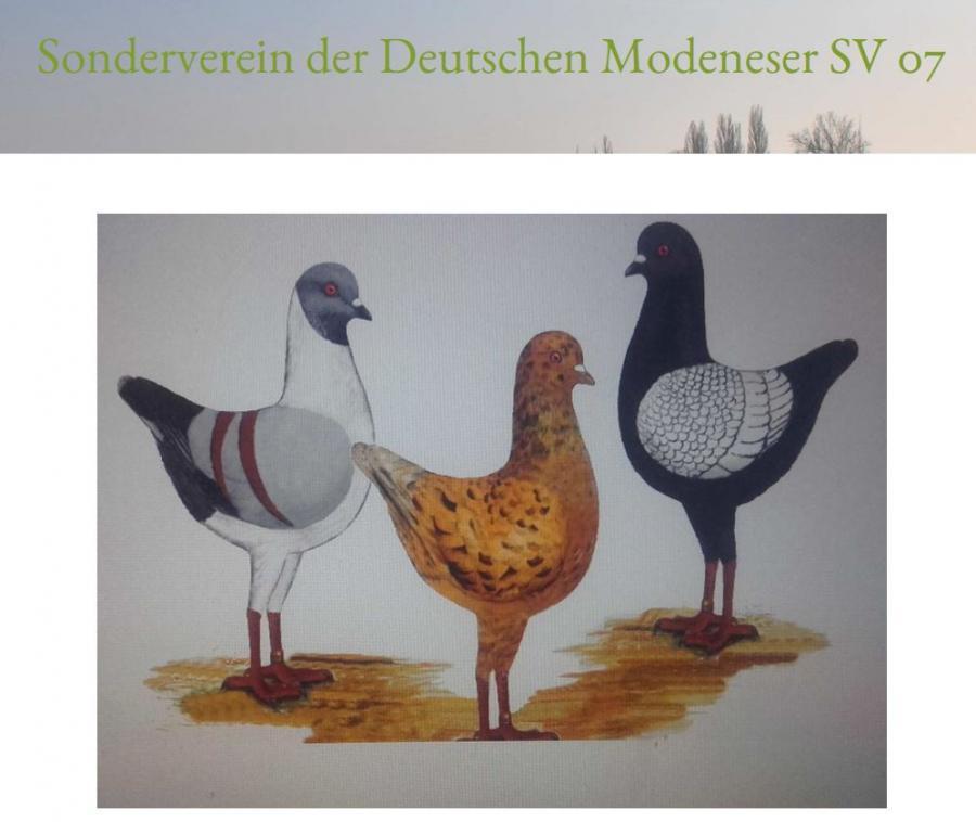 Homepage SV Österreich