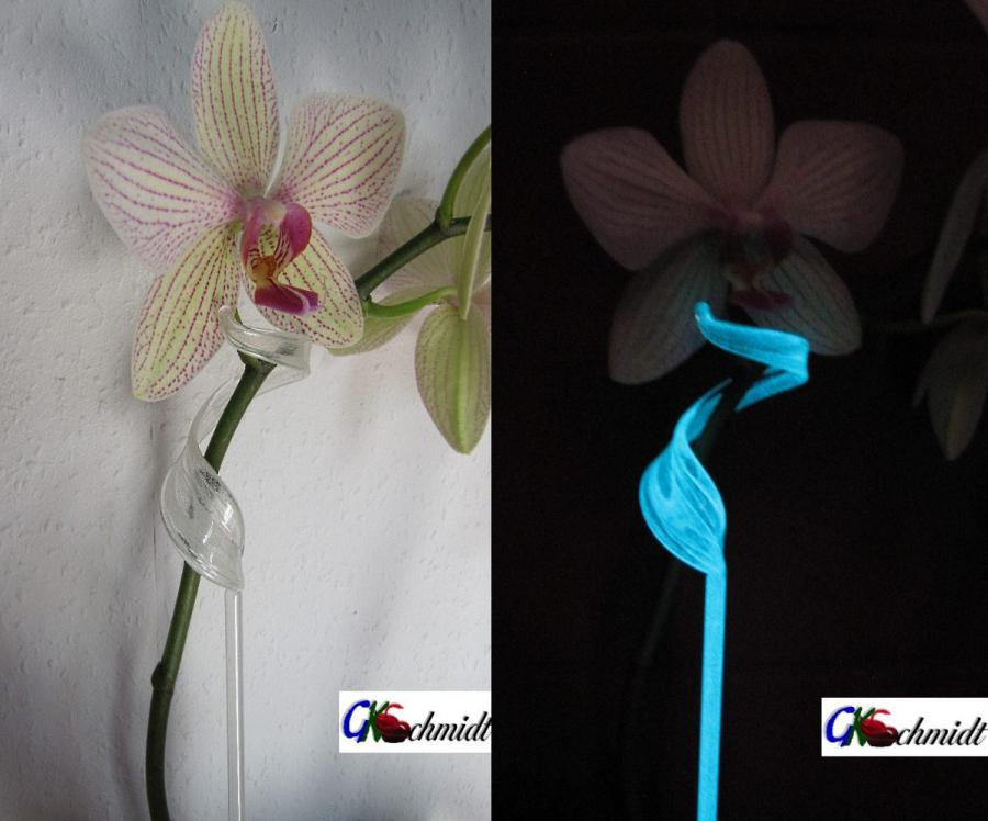 Orchideenstab lumineszierend 2