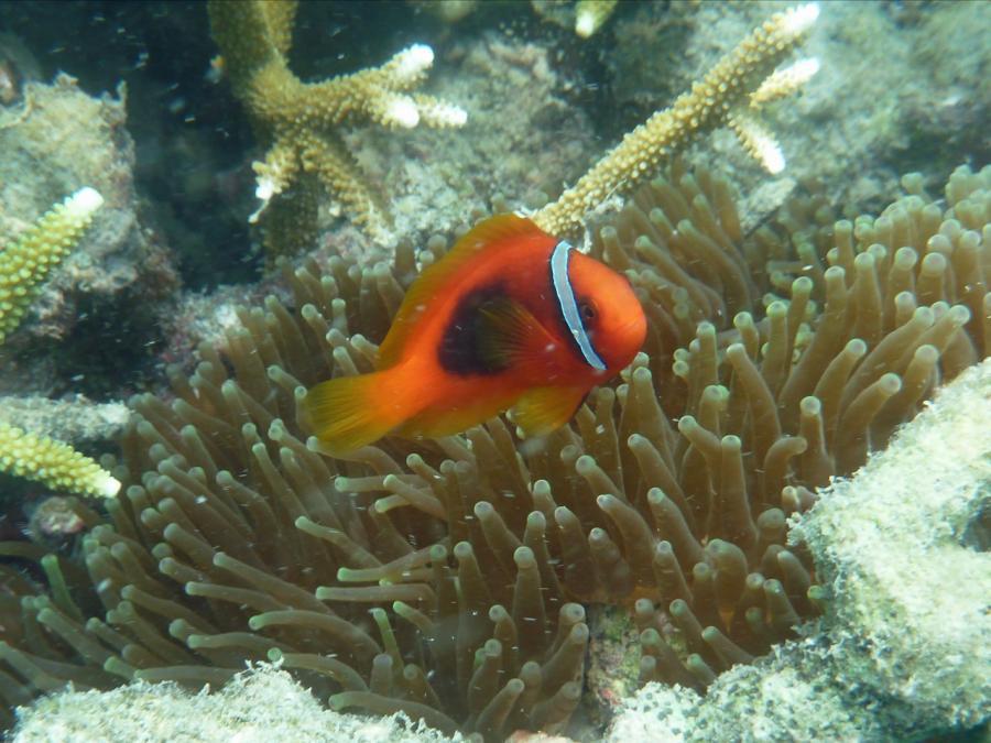 Lang Tenga Unter Wasser