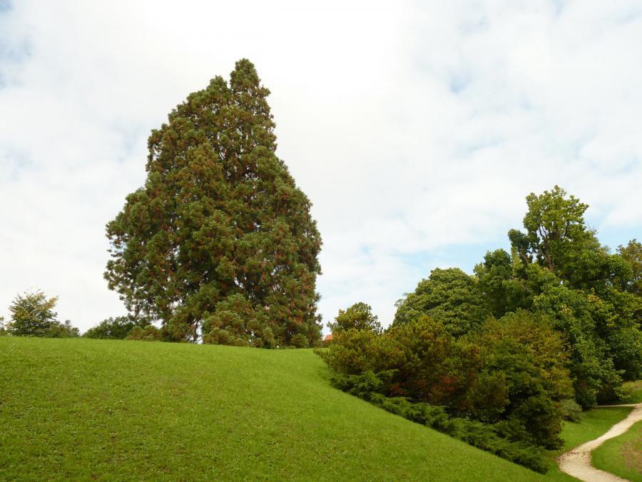 Im Park zum Schloss fachsenfeld