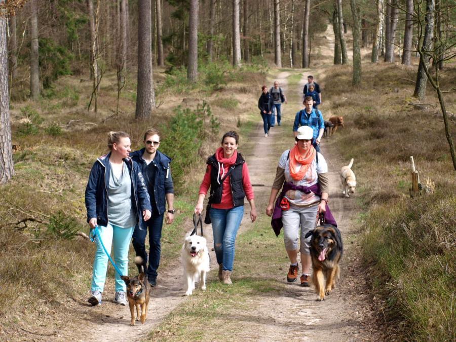 Hundewanderung Heide