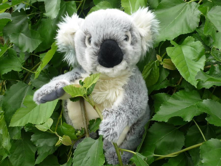 Koalagrün