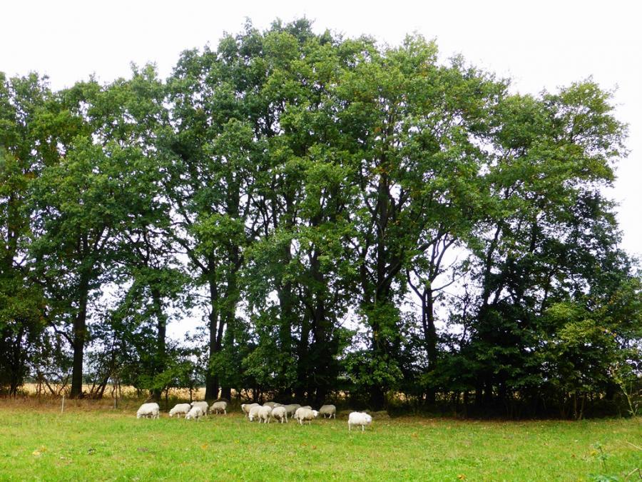kleine Skudden unter großen Bäumen