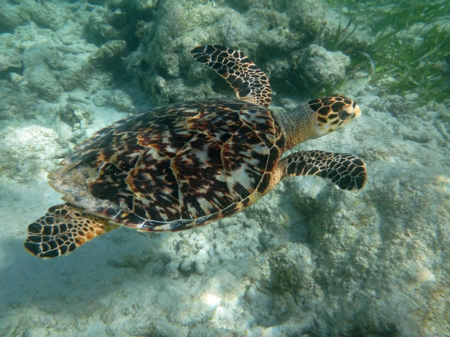 Mexiko Unter Wasser