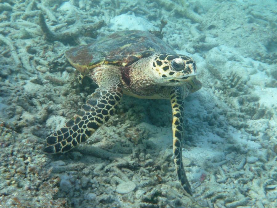 Lang Tanga Unter Wasser