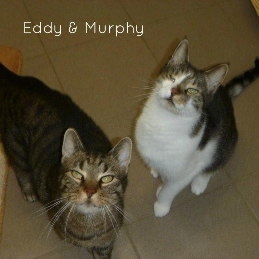 Eddy & Murphy