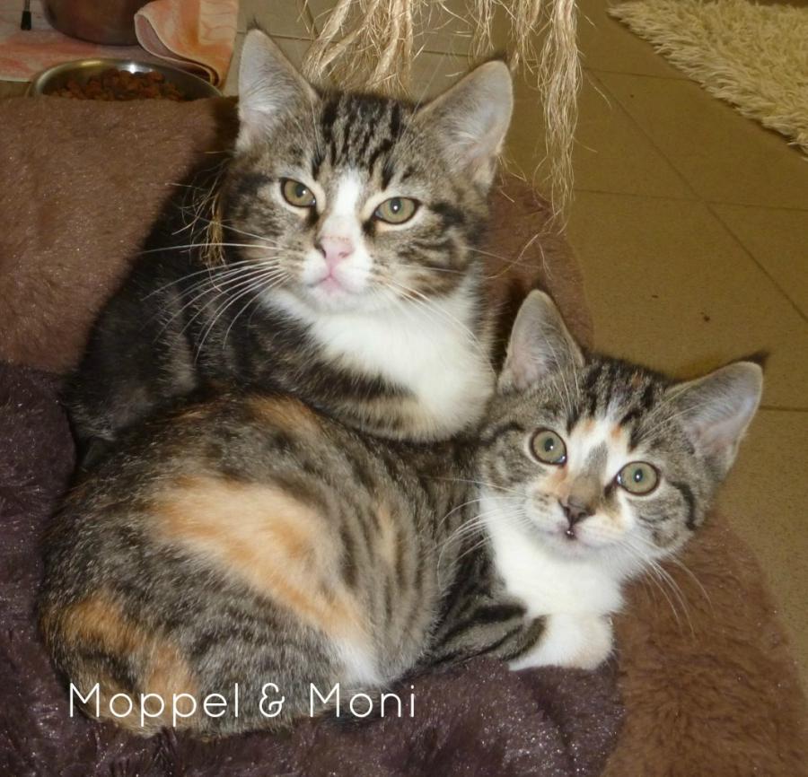Moppel & Moni