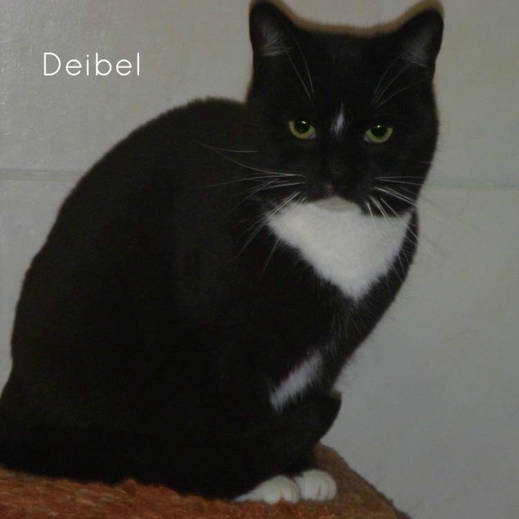 Deibel