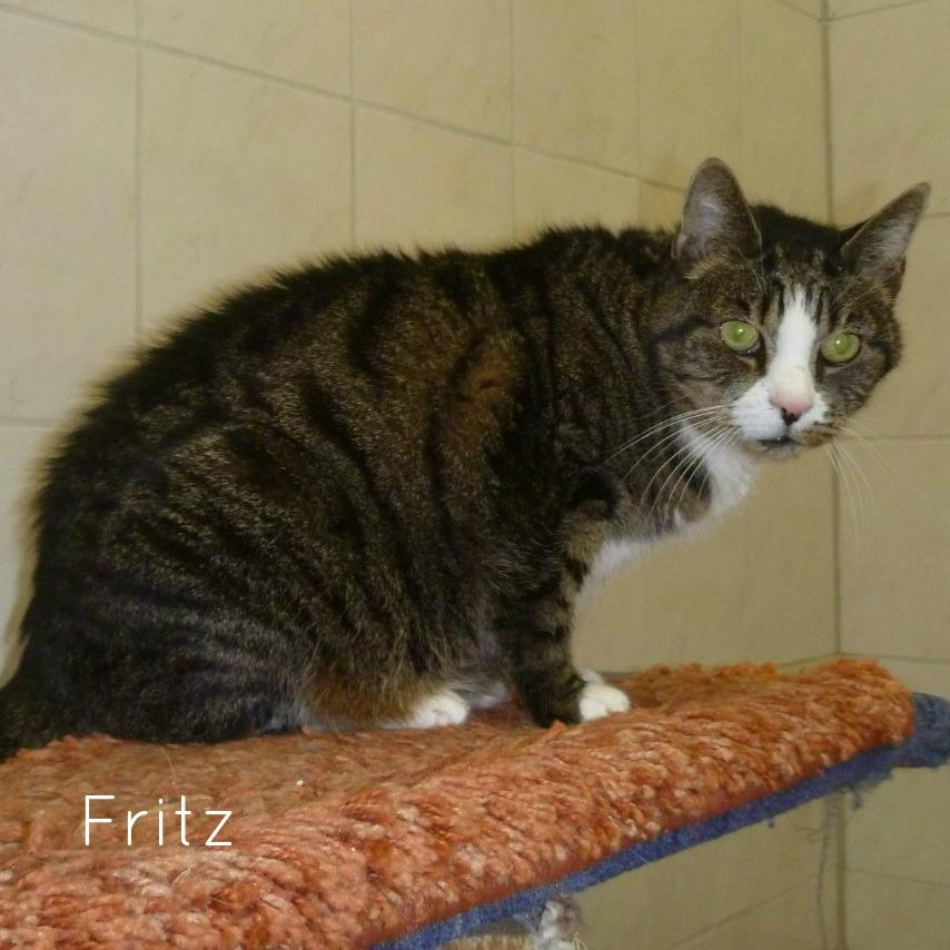 Fritz ( - 2015)