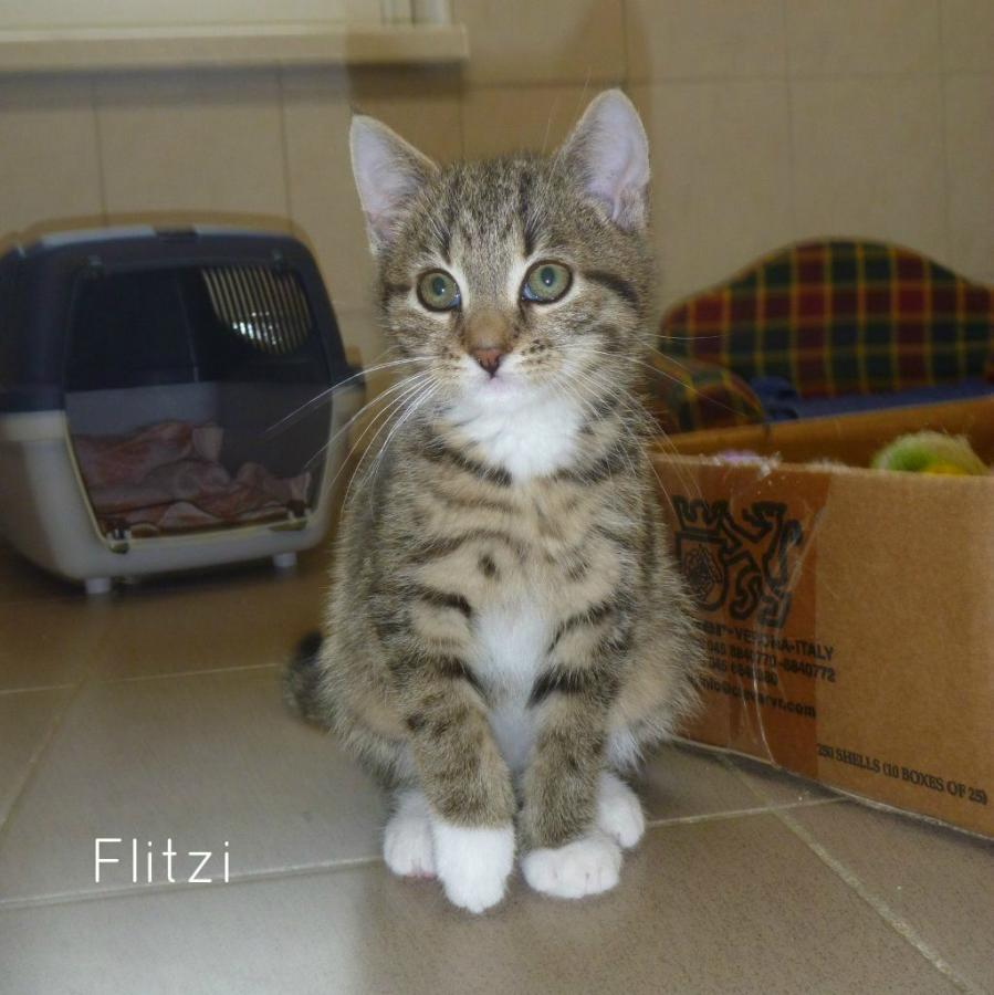 Flitzi