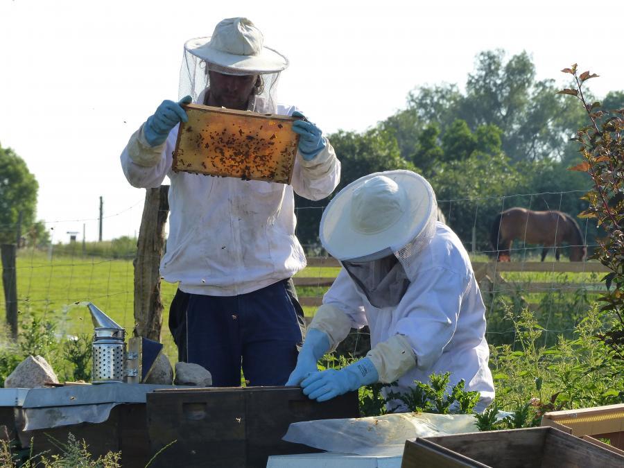 Bienen Foto J. Gössling