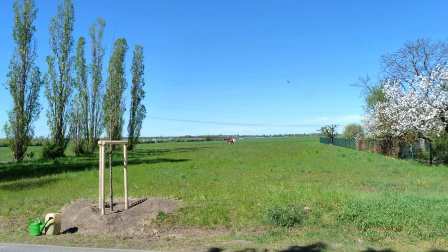 Eine der Zelkoven mit Blick in die Feldmark