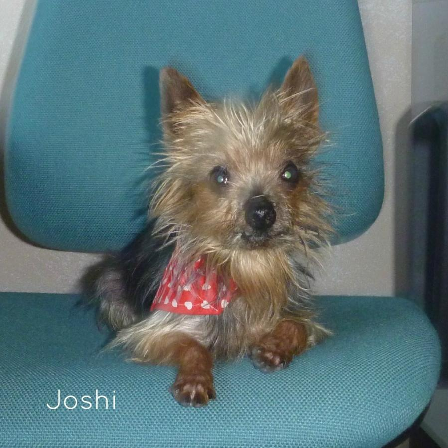 Joshi