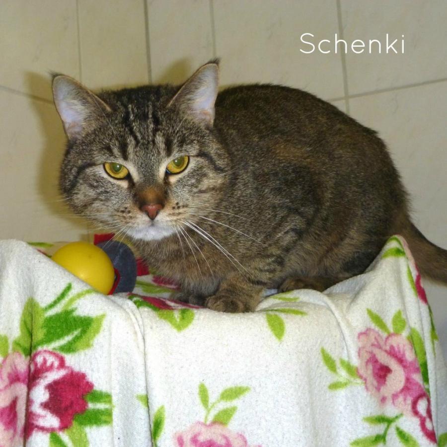 Schenki