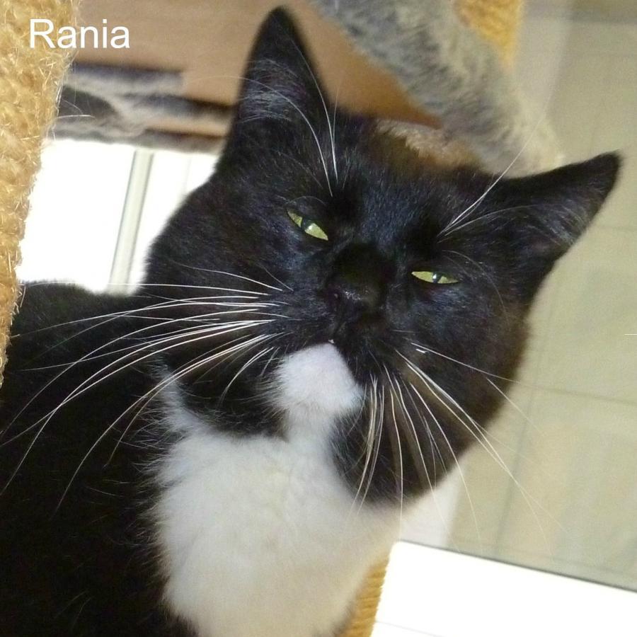 Ramia
