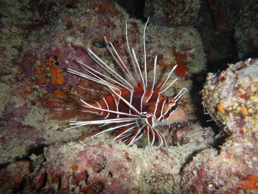 Rannalhi Unter Wasser