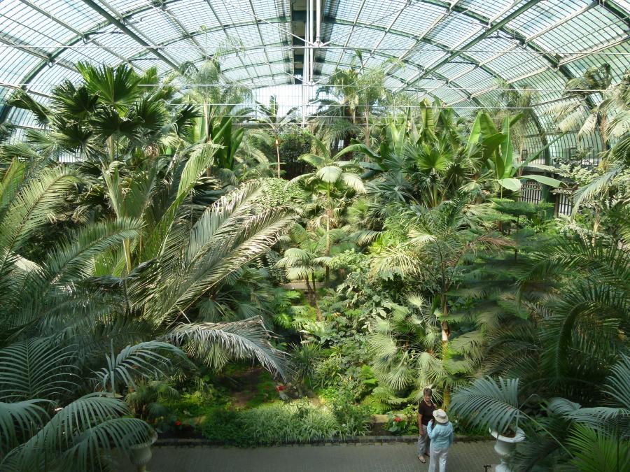 Palmenhaus im Palmengarten Frankfurt a.M. (c) Hilke Steinecke