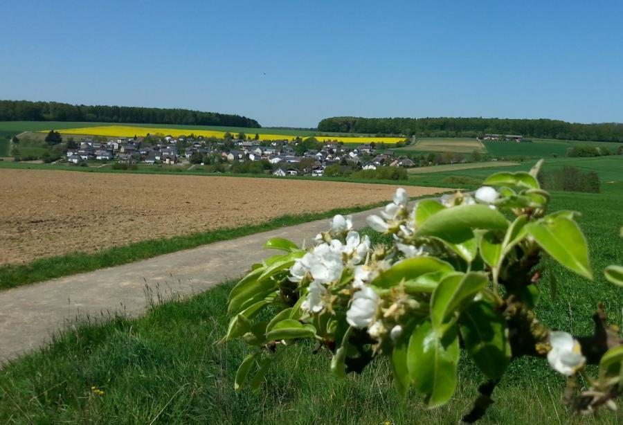 Baumbluehen im Mai 2016
