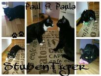 Paul-Paula