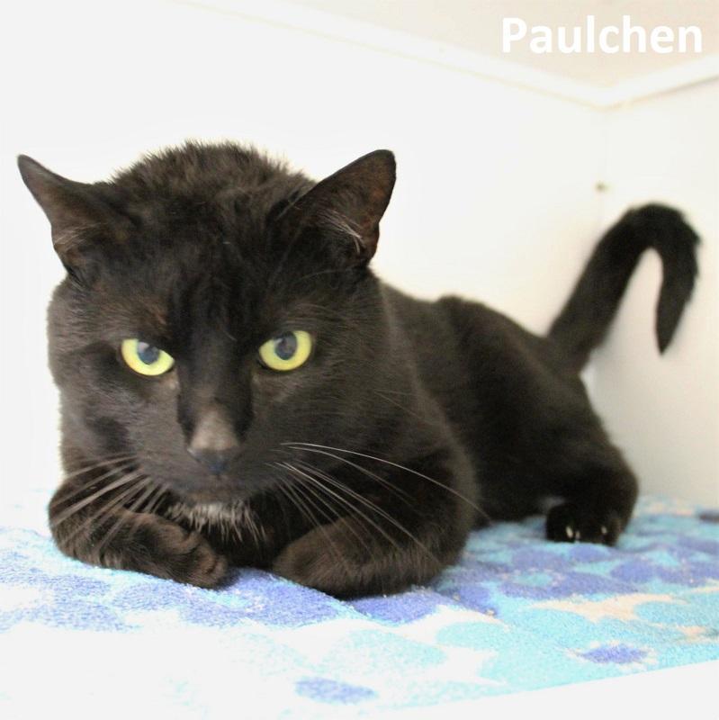 Paulchen