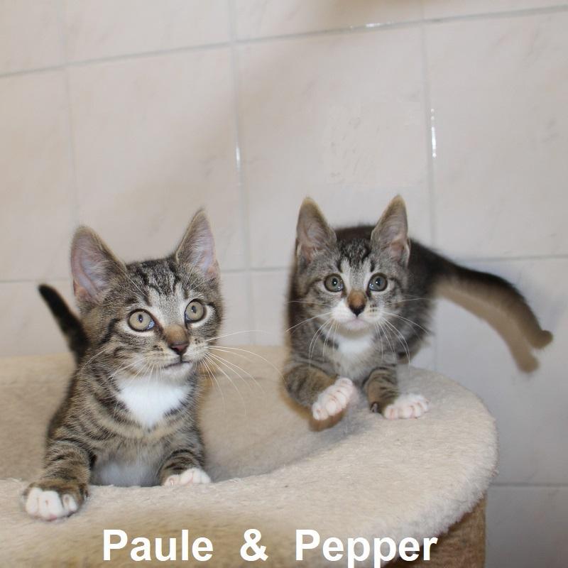 Paule & Pepper