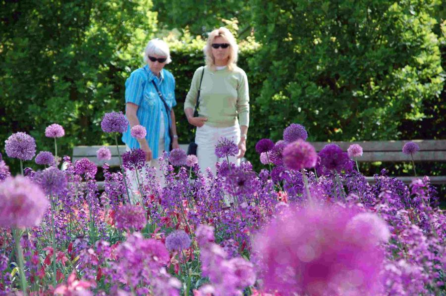 Blumenband Allium