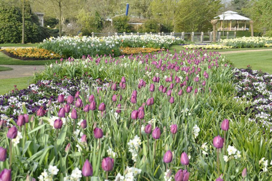 Blumenband Frühjahr