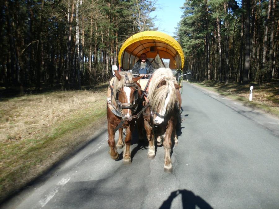 Kremser im Wald