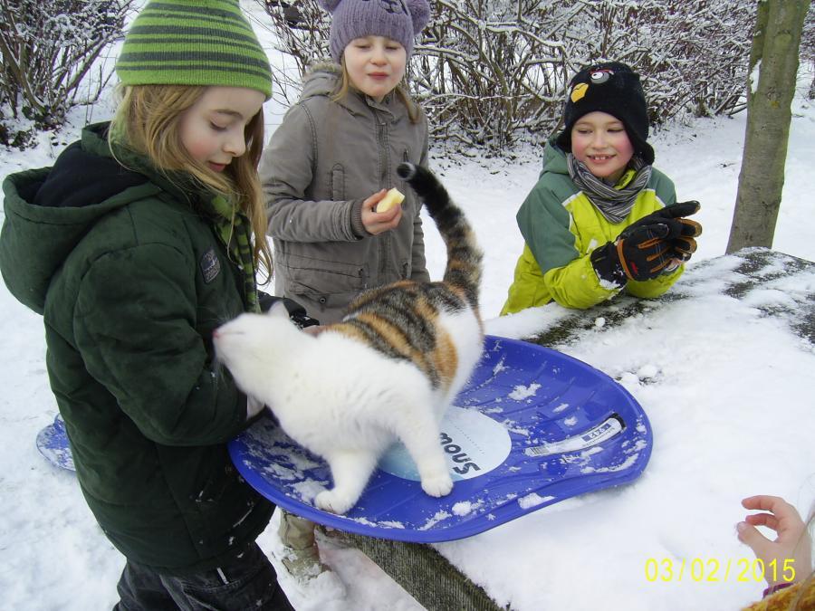 ABC, die Katze lief im Schnee....