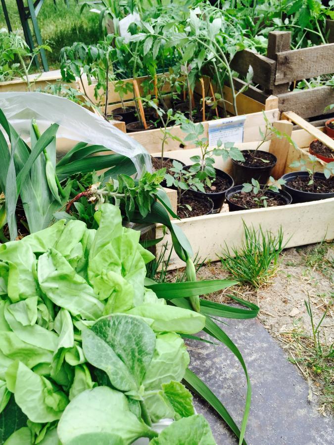 Pflanzen zum Tausch bei der Pflanzentauschbörse 2015