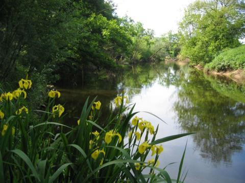 Naturnahes Gewässer 13.05.2014
