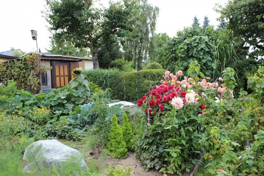 Gartensparte_Rosenstraße_01