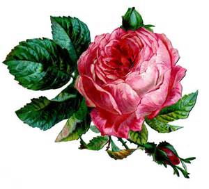 Rose für Ehrungen