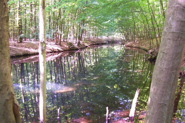 Ruhner Wald