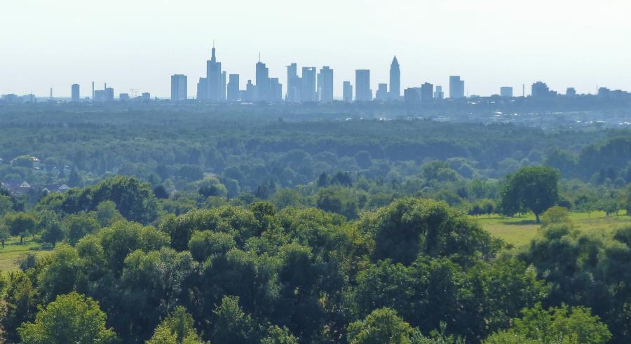 Bild zeigt einen Wald und die Skyline von Frankfurt; Maintal ist unmittelbarer Nachbar von Frankfurt am Main - und liegt doch mitten im Grünen