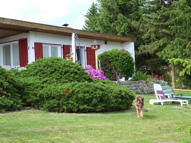 ganz im Grünen gelegenes Ferienhaus, Haustier erlaubt