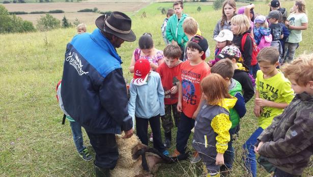 Schafhirte ließ Kinder ein Schaf streicheln