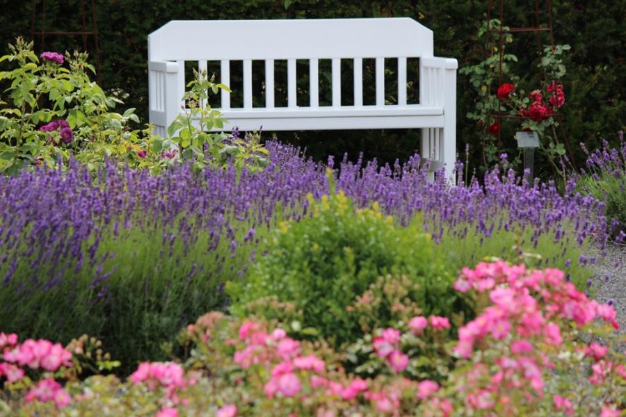 Schlosspark: Ruhe inmitten von Lavendelpracht ...