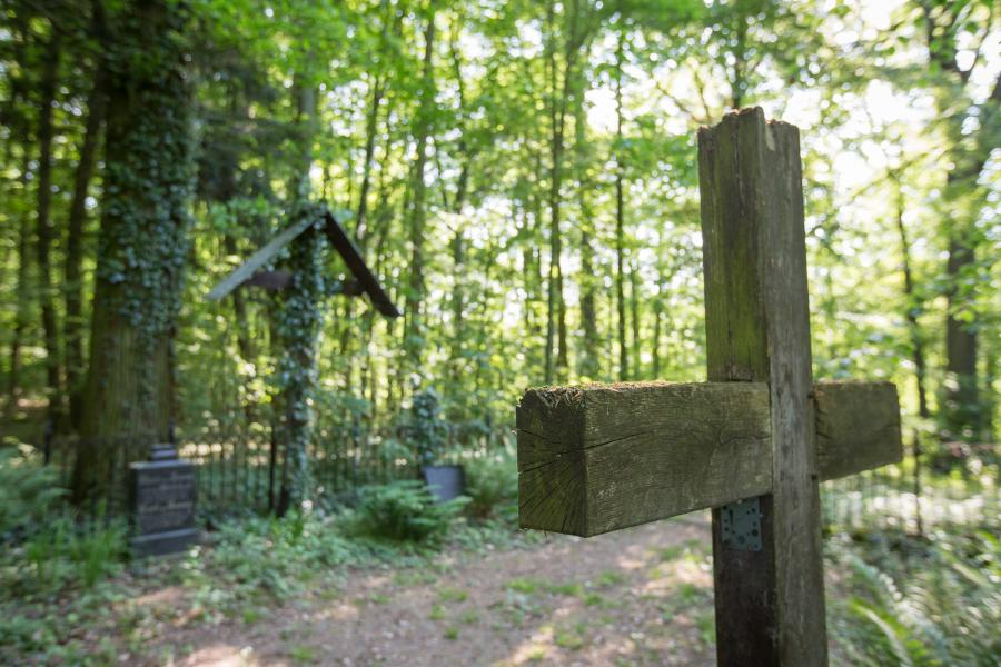 Schlosspark Bomsdorf, Natur, Seenland Oder-Spree // Foto Florian Läufer