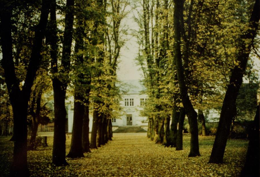 Blick durch die Lindenallee zum Schloss, um 1965