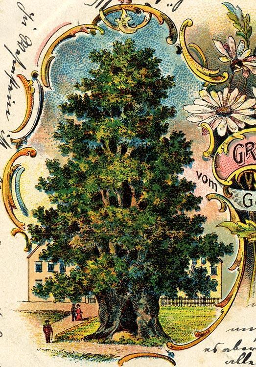Schmorsdorfer Linde auf alter Postkarte