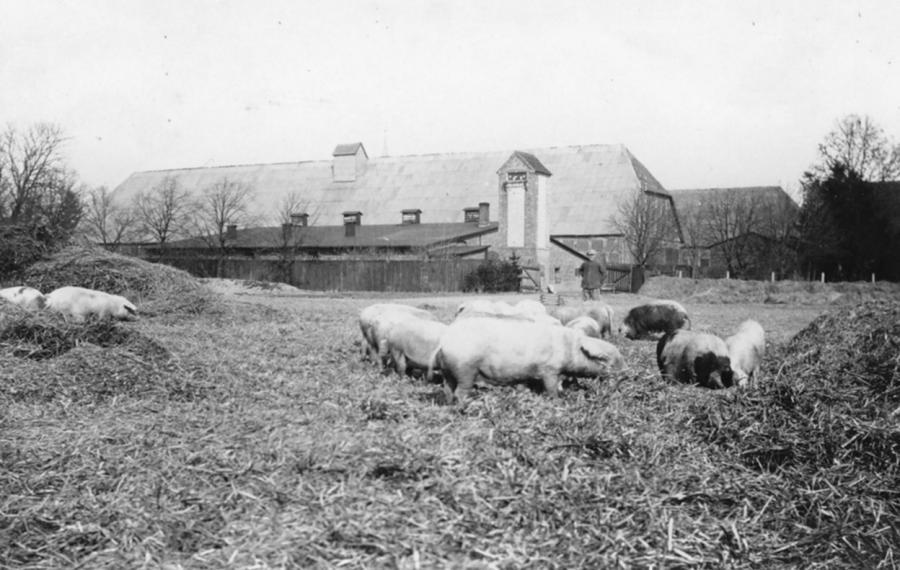 Schweinestall und dahinter die Lelkendorfer Scheune